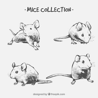 Hand getrokken muizen collectie