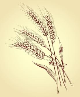 Hand getrokken oren van tarwe met granen, bakkerij schets vectorillustratie