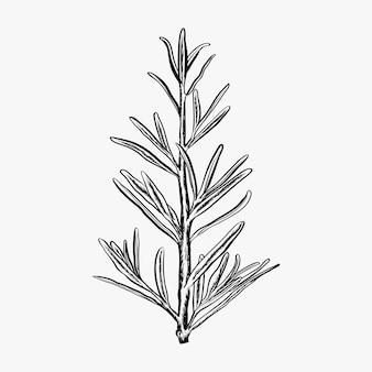 Hand getrokken rozemarijn vector illustratie-rozemarijn logo ontwerp