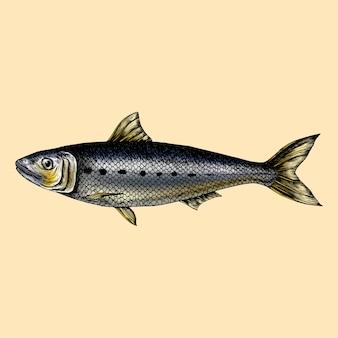 Hand getrokken sardine vis