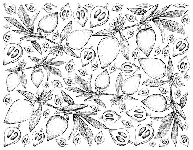 Hand getrokken schets canistel, sapote, eggfruit fruit