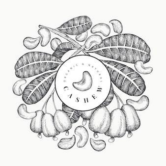 Hand getrokken schets cashew sjabloon. natuurvoedingillustratie op witte achtergrond. vintage moer illustratie. gegraveerde stijl botanische achtergrond.