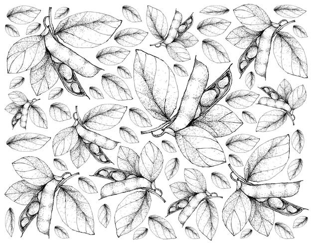 Hand getrokken schets fava bean of tuinbonen.