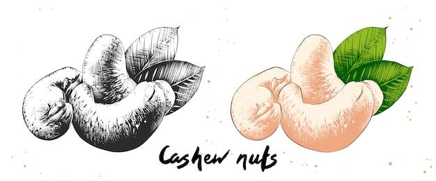 Hand getrokken schets van cashewnoten