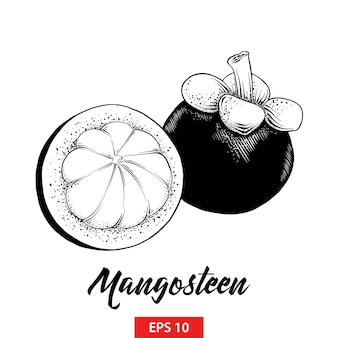 Hand getrokken schets van mangosteenvrucht in zwarte