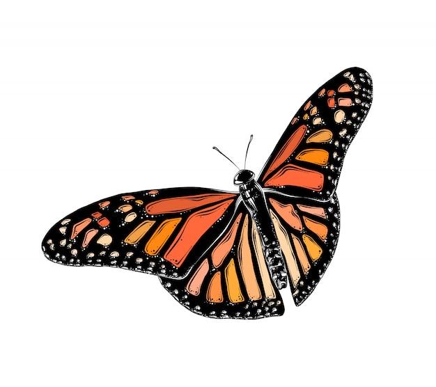 Hand getrokken schets van vlinder in kleur. geïsoleerd