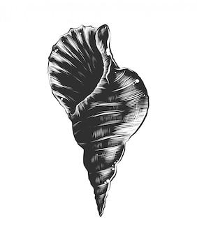 Hand getrokken schets van zee schelp in zwart-wit