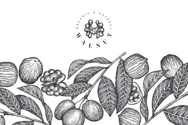 Hand getrokken schets walnoot. biologisch voedsel vectorillustratie. retro moer illustratie. gegraveerde botanische stijl.