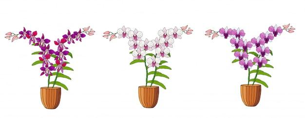 Hand getrokken set orchideeën in bloempotten.