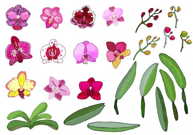 Hand getrokken set van orchideebloemen.