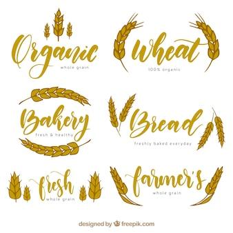 Hand getrokken tarwe logo-collectie