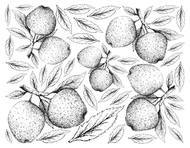 Hand getrokken van appelvruchten op witte achtergrond