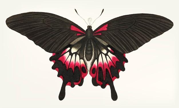 Hand getrokken van caudate bruine vlinder