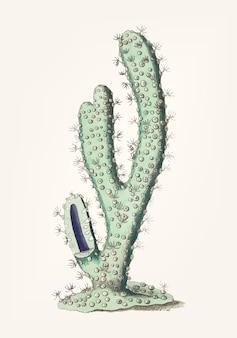 Hand getrokken van dik-bewapende gorgonia