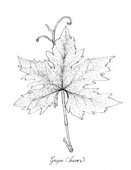 Hand getrokken van druivenblad op witte achtergrond