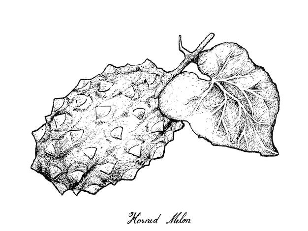 Hand getrokken van gehoornde mel of kiwano