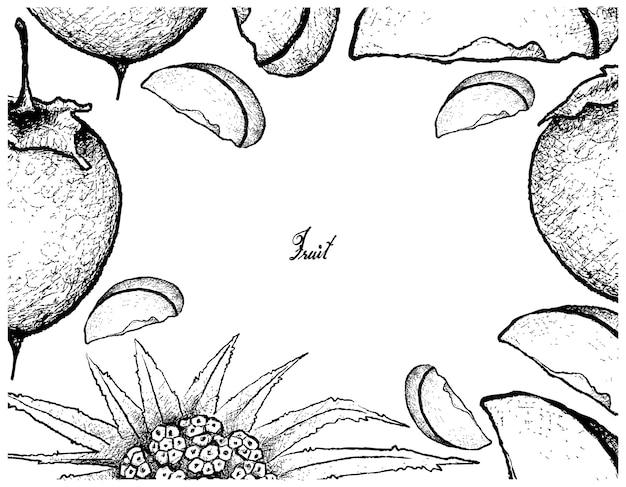 Hand getrokken van kaki of japanse dadelpruim op witte achtergrond