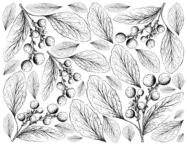 Hand getrokken van orangeberry-fruit op witte achtergrond