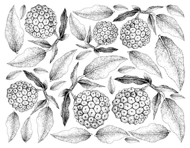 Hand getrokken van pindaiva fruit op witte achtergrond