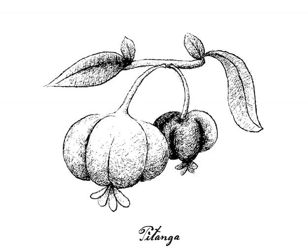 Hand getrokken van pitanga vruchten op witte achtergrond