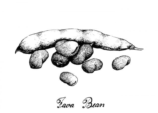 Hand getrokken van verse groene fava bean Premium Vector