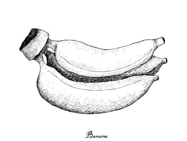 Hand getrokken van verse rijpe gouden bananen