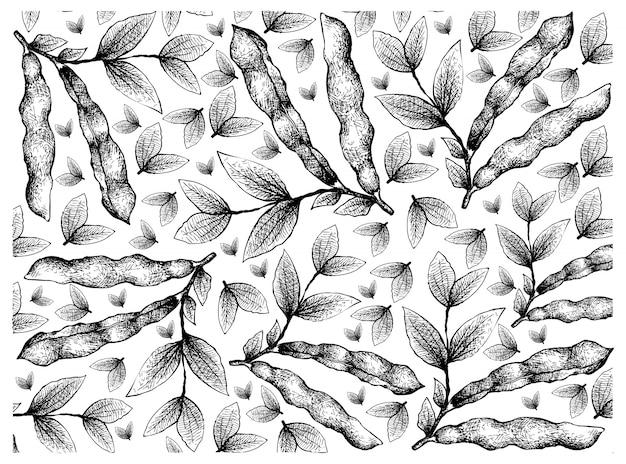 Hand getrokken van verse tuinbonen achtergrond