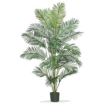 Hand getrokken vector palmboom