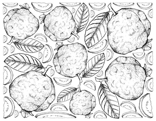 Hand getrokken verse guave vruchten