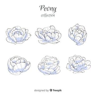 Hand getrokken verzameling van pioenroos bloemen