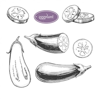 Hand getrokken vintage groenten collectie aubergine: volledige aubergine, een plakje aubergine illustratie. voor inpakpapier, straatfestival, boerenmarkt, plattelandsmarkt, winkel, menu, café, restaurant.
