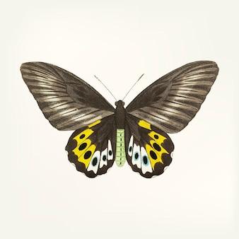 Hand getrokken vlinder