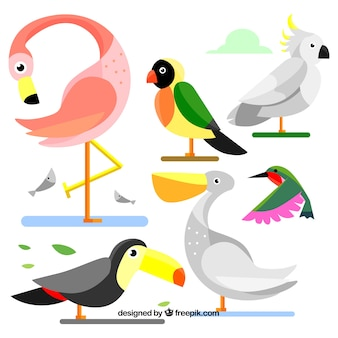 Hand getrokken vogelcollectie