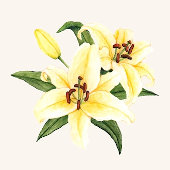 Hand getrokken witte lily bloem geïsoleerd