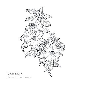 Hand tekenen camelia bloemen illustratie