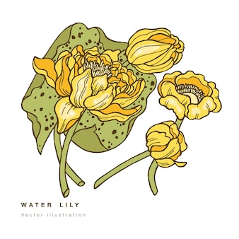 Hand tekenen lotusbloemen illustratie. botanische bloemenkaart op witte achtergrond met waterlelie.