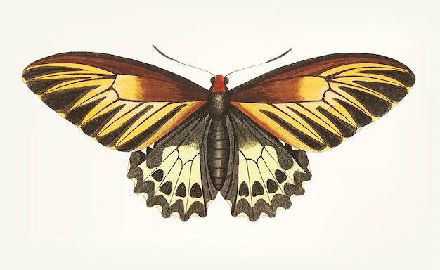 Hand van bruine vlinder wordt getrokken die