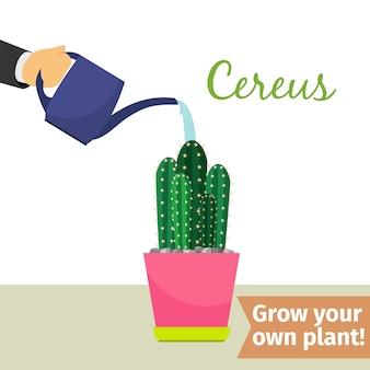 Hand water geven cereus plant