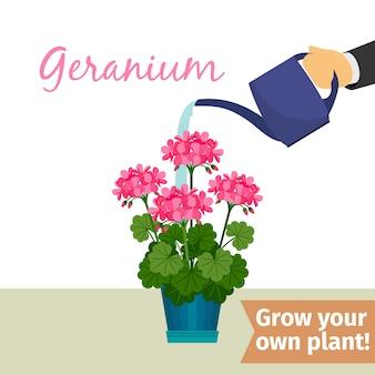 Hand water geven geranuim plant