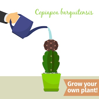 Hand water gevende copiapoa plant