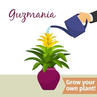 Hand water gevende guzmania plant
