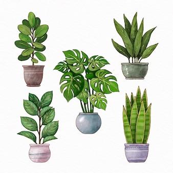 Handgeschilderde aquarel kamerplant collectie