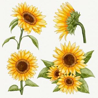 Handgeschilderde aquarel zonnebloemen collectie