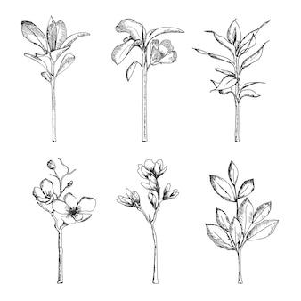 Handgetekend met kruiden en wilde bloemen