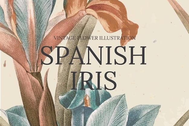 Handgetekende bloemsjabloon met spaanse irisachtergrond, geremixt van kunstwerken uit het publieke domein