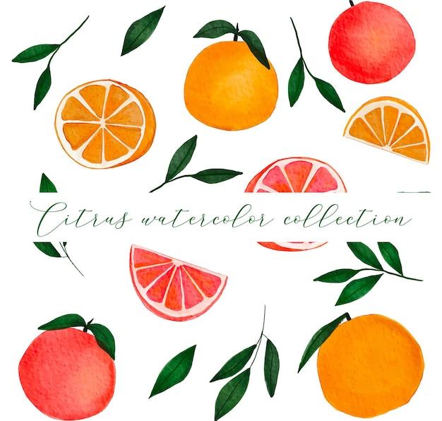 Handgetekende citrusvruchtencollectie met sinaasappel, grapefruit en bladeren