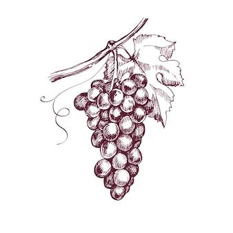 Handgetekende druivenschetsillustratie voor ontwerpwijn