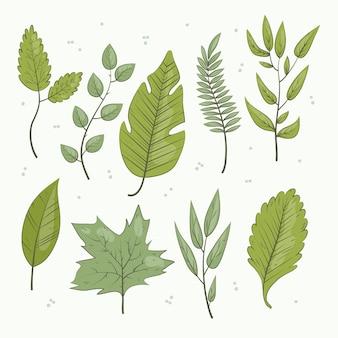 Handgetekende groene bladeren collectie