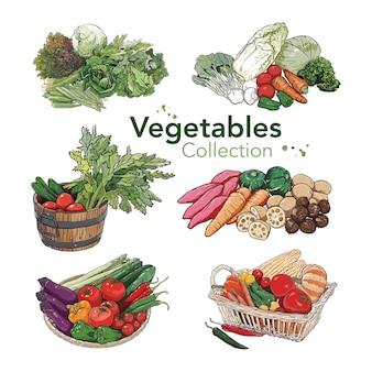 Handgetekende groenten collectie