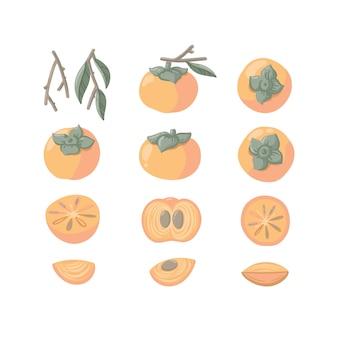 Handgetekende kaki set. exotisch fruit met takken, bladeren, plakjes.
